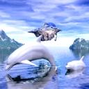 Dolphin Artwork