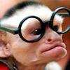 Teacher Monkey