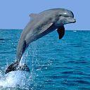 exotic animal avatar 0303