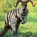 exotic animal avatar 0617